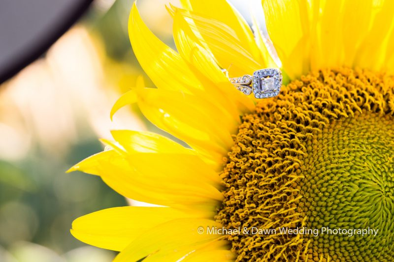 photograph of an engagement ring on a sunflower